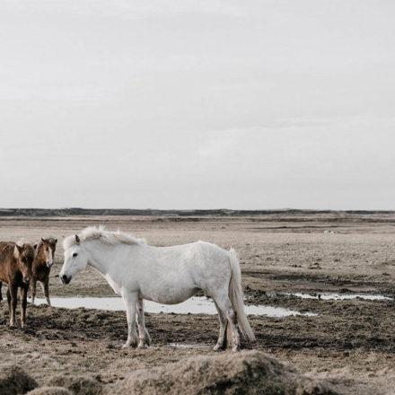 Mexican horses